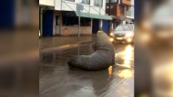 Seelöwe blockiert Straße