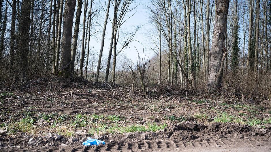 Sinsheim: Ein Waldstück, in dem sich der mutmaßliche Tatort befindet