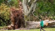 Der Orkan Ela wütete vor zwei Jahren in Düsseldorf. Im dortigen Hofgarten riss er selbst Baumriesen aus der Verankerung.