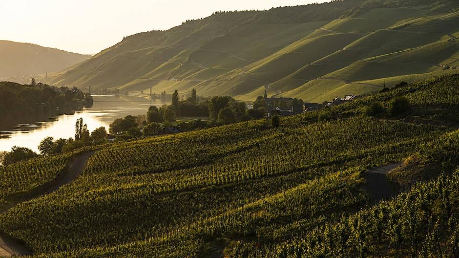 Traumhafte Lage: Manches von dem, was auf den Weinbergen von Weingut Schloss Lieser wächst, bliebt wenigen auserwählten kehlen vorbehalten.