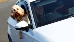 Amerikaner gibt seinem Hund Fahrstunden