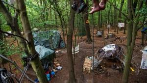Im Wald der Widersprüche