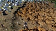 Das Gefängnis wird zum Friedhof: Die Beisetzung von Opfern der Häftlingsrevolte im brasilianischen Manaus wird vorbereitet.