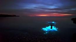 Seltene Planktonart lässt das Meer blau leuchten