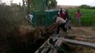 Förster retten Löwin aus Brunnen