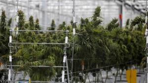 Lauterbach und FDP-Nachwuchs fordern Legalisierung von Cannabis