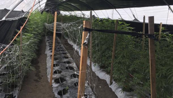 Sieben Tote auf illegaler Marihuana-Plantage