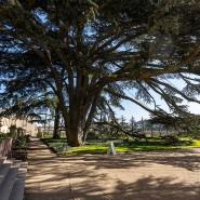Ein bisschen Exotik für heimische Gefilde: Die Libanonzeder wird als sogenannte Gastbaumart getestet.