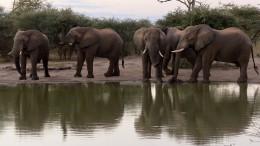 Dutzende Elefanten in Zimbabwe verhungern elendig