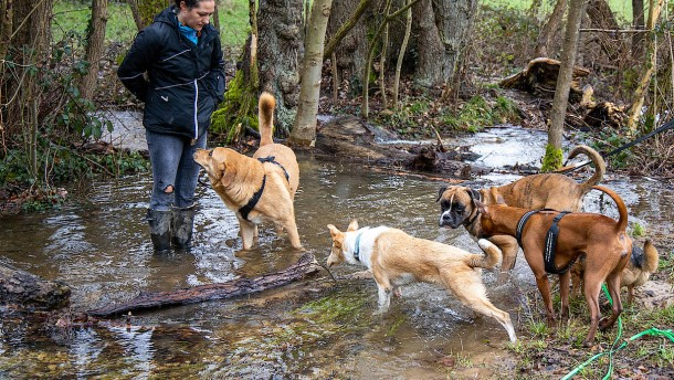 Die Tücken der Versicherung für das Haustier