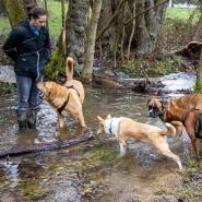 Spaziergang mit Hunden: Katarina Josephowitz hat ihre Vierbeiner gut versichert.