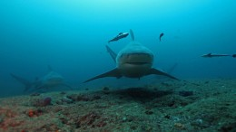 Haie und Rochen werden geschützt