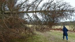 Umgeknickte Bäume und Straßensperrungen in Hessen