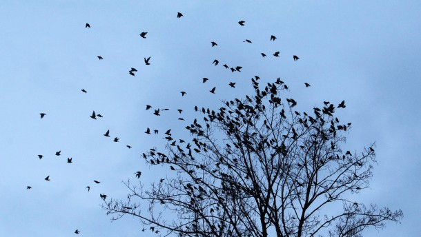 Vögel verlassen Baumkrone