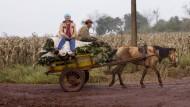 Sind Industriebetriebe die falsche Landwirtschaft?