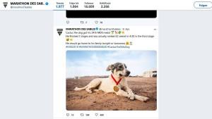 Hund läuft Ultramarathon in der Sahara mit