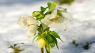 Winterliche Blüten