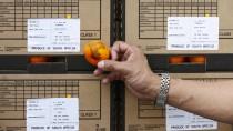 Südafrikanische Zitrusfrüchte leiden derzeit häufig unter Pilzbefall