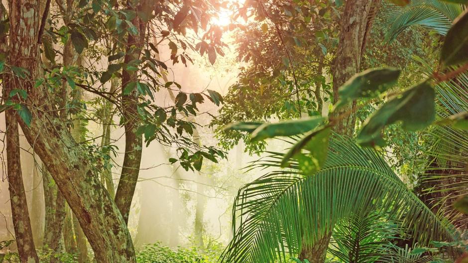 Natürliche Kohlenstoffspeicher wie der (wachsende) Urwald in  Costa Rica sind notwendiger, aber nicht  hinreichender Bestandteil weltumspannender  Klimapläne.