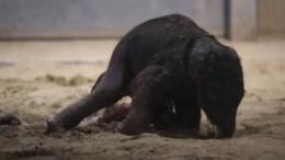 Video zeigt Elefantengeburt in belgischem Zoo