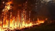 Buschbrände zerstören zahlreiche Häuser