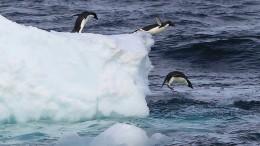 Das Eis der Antarktis schwindet immer schneller