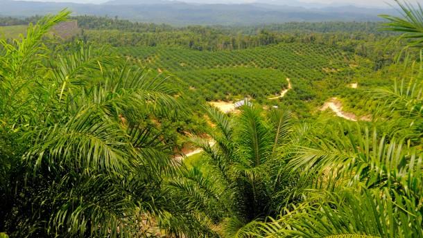 Kleinkrieg belastet Palmölproduktion