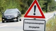 Vorsicht vor Laubbäumen: Derzeit sind in Hessen wieder vermehrt Eichenprozessionsspinner unterwegs.