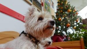"""""""Tiere sind als Weihnachtsgeschenk absolut ungeeignet"""""""