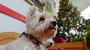 Kein kleiner Hund unter dem Baum: Das Berliner Tierheim vermittelt in der Weihnachtszeit keine Tiere.