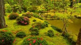 Warum Moos dem Garten gut steht