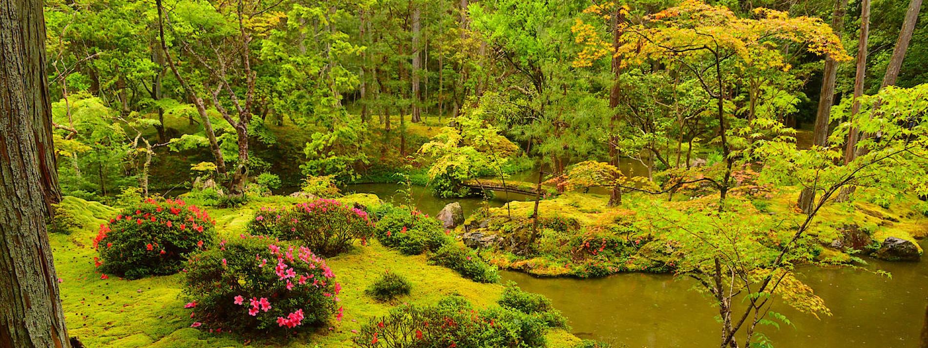 Ein Plädoyer für grüne Winzlinge Warum Moos dem Garten gut