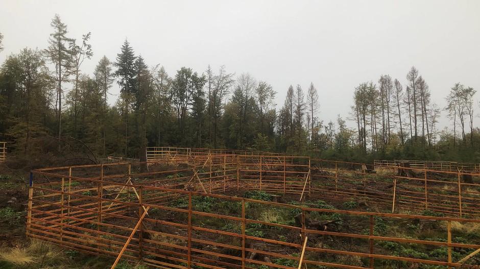 Umhegt: Schutz für Neupflanzungen im Heidenroder Wald