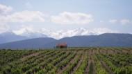 Die Preise für Weinberge steigen: Im französischen Roussillon kostet ein Hektar Anbaufläche noch zwischen 10.000 und 15.000 Euro. Im Landesvergleich ist das günstig