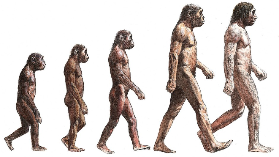 Aufrecht: Die Evolution kennt scheinbar nur eine Richtung.