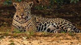 Zahlreiche seltene Tierarten in Gefahr
