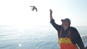 Hummerfischer vom Aussterben bedroht