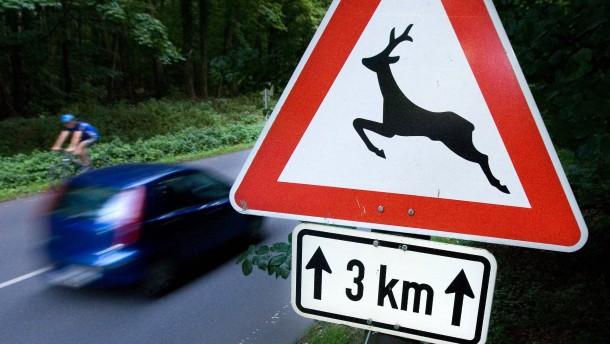 Wildunfälle - im Frankfurter Stadtgebiet häufen sich die Unfälle mit Wild. Polizei und Forstamt arbeiten an einer besseren Prävention zum Schutz von Autofahrern und Tieren