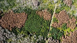 Wie der Klimawandel den deutschen Wald zerstört