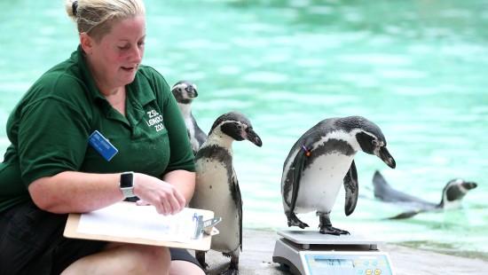 Warum der Londoner Zoo alle Tiere wiegt