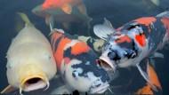 VW soll Winterkorn 60.000 Euro teure Heizung für Fischteich gezahlt haben
