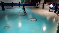Schlittschuhlaufen auf 5000 gefrorenen Fischen