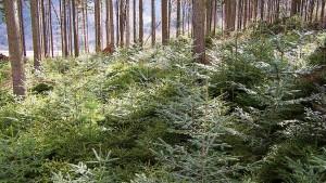 """""""100 Millionen neue Bäume"""""""