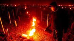 Winzer beheizen Weinberg in Frankreich mit Kerzen