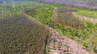 F.A.Z.-Klimablog: Dürre trifft Deutschland auch in diesem Jahr