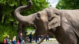 Tierpfleger in Spanien von Elefant getötet