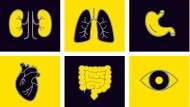 Herz, Niere, Lunge – der Bedarf an Organen ist hierzulande viel höher als die Zahl der Spender.
