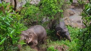 Sechs Elefanten sterben bei Unglück in Nationalpark