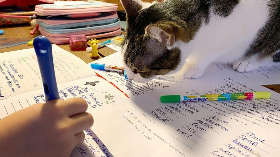 Immerhin die Katze hat hier einen Blick auf die Schularbeiten