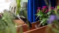 """Hobbygärtnern wird oft geraten, für das Setzen von Pflanzen die """"Eisheiligen"""" abzuwarten."""
